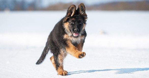 Puppy Training in Wisconsin